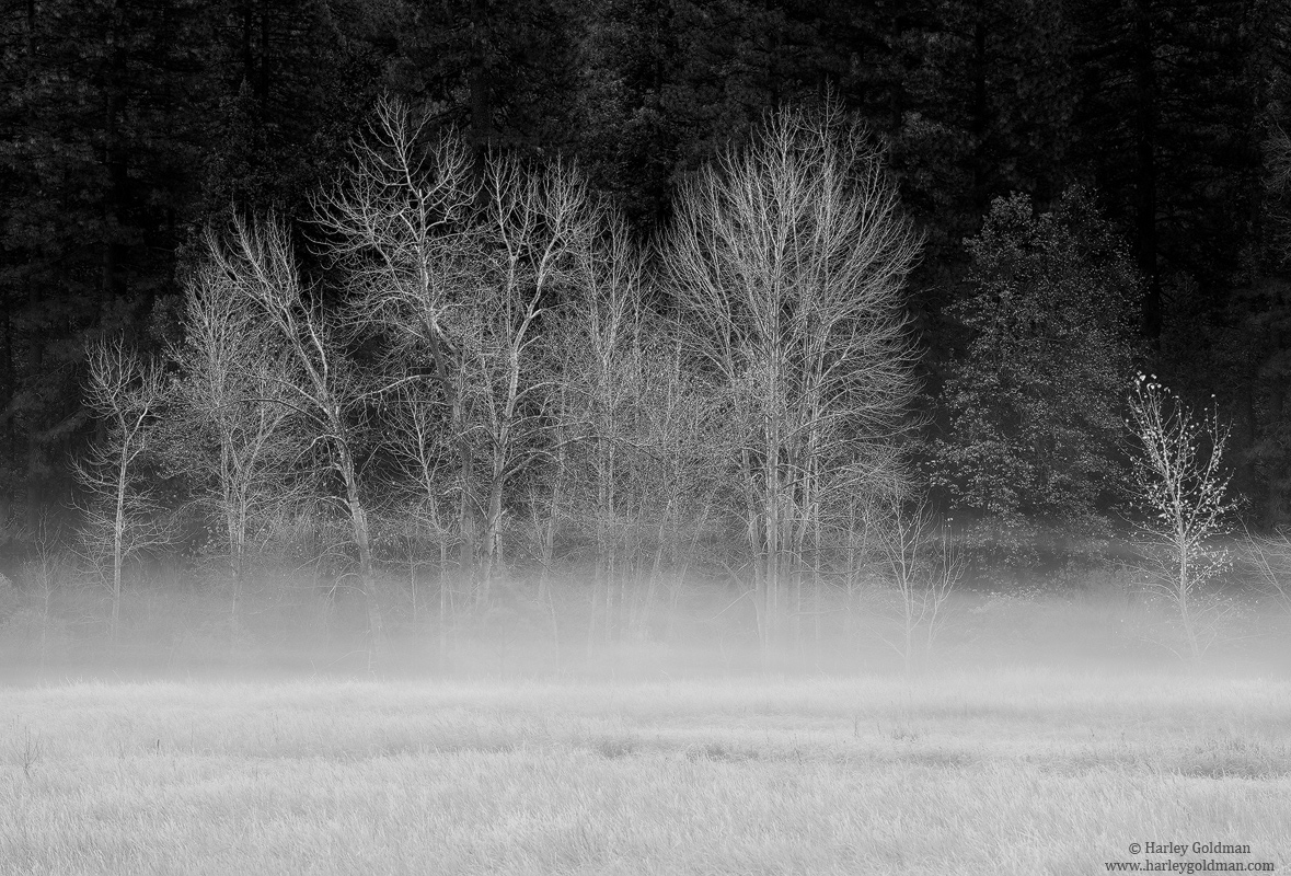 yosemite, park, fog, photo