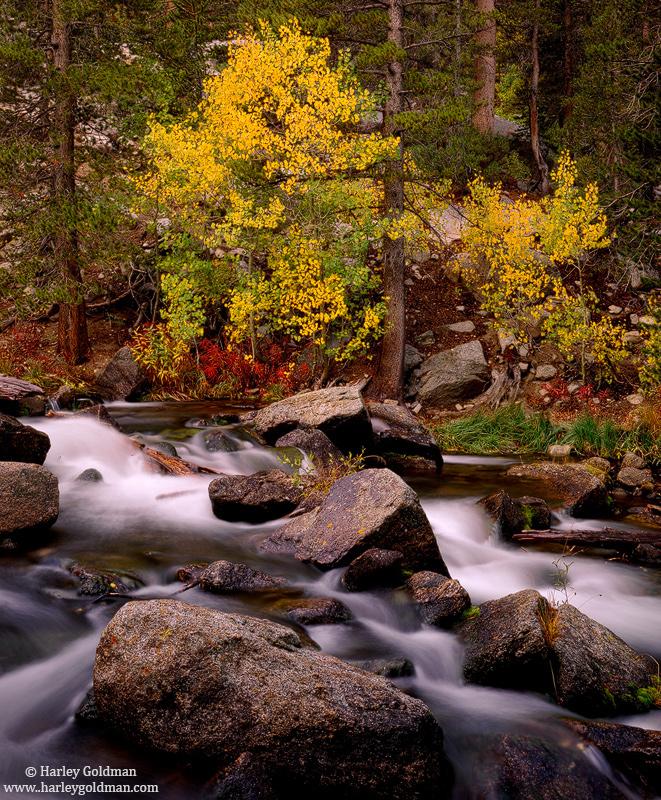 bishop, creek, fall, autumn, color, sierra, mountain, , photo