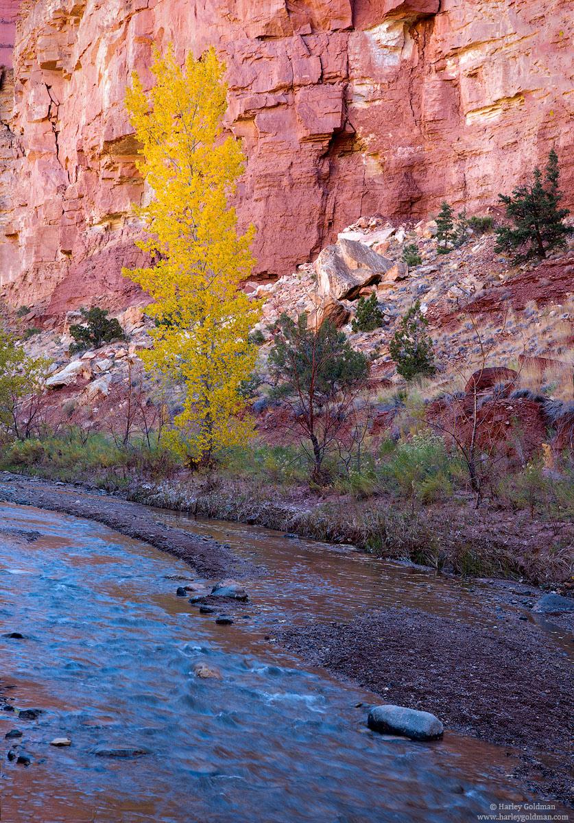 Utah, blue, sky, cottonwood, fall, autumn, canyon, river, sandstone, reflection