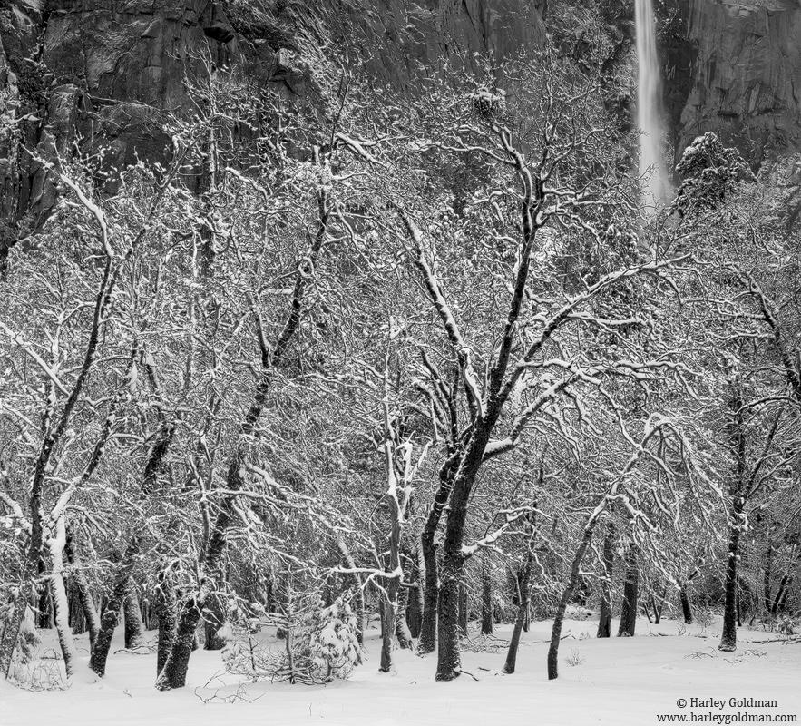 oak, bridal, veil, fall, yosemite, valley, national, park, photo