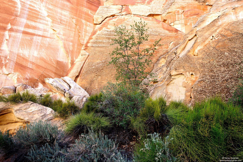 Utah, canyon, garden, sandstone, wall
