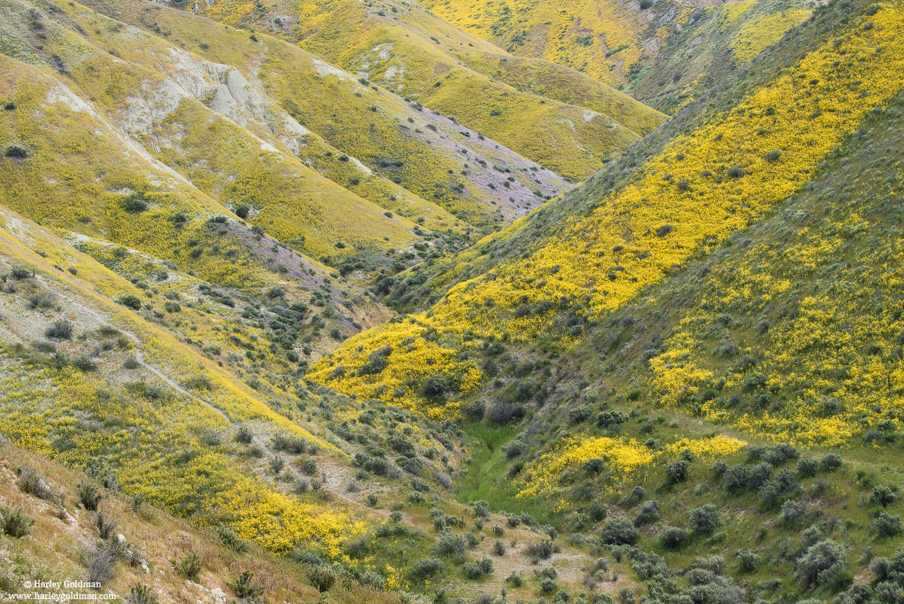 canyon, carrizo, plain, national, monument, photo
