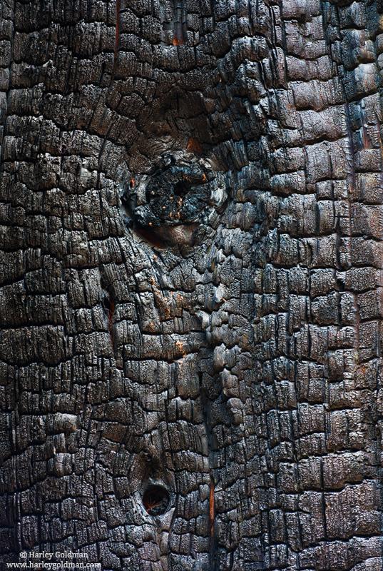 yosemite, national, park, photo