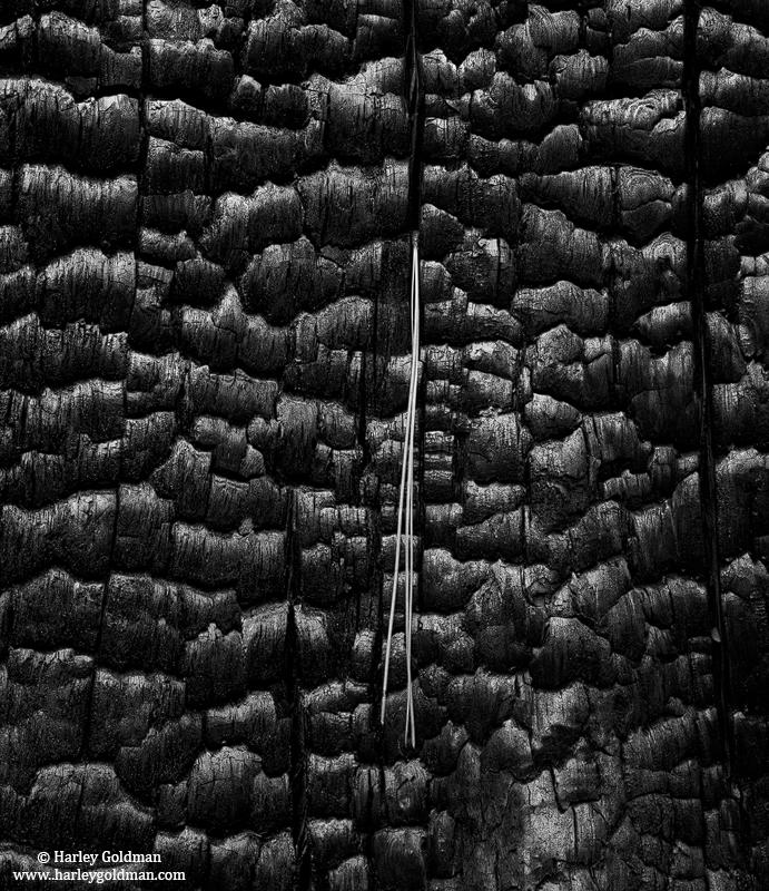 yosemite, national, park, burn, char, needle, tree, photo