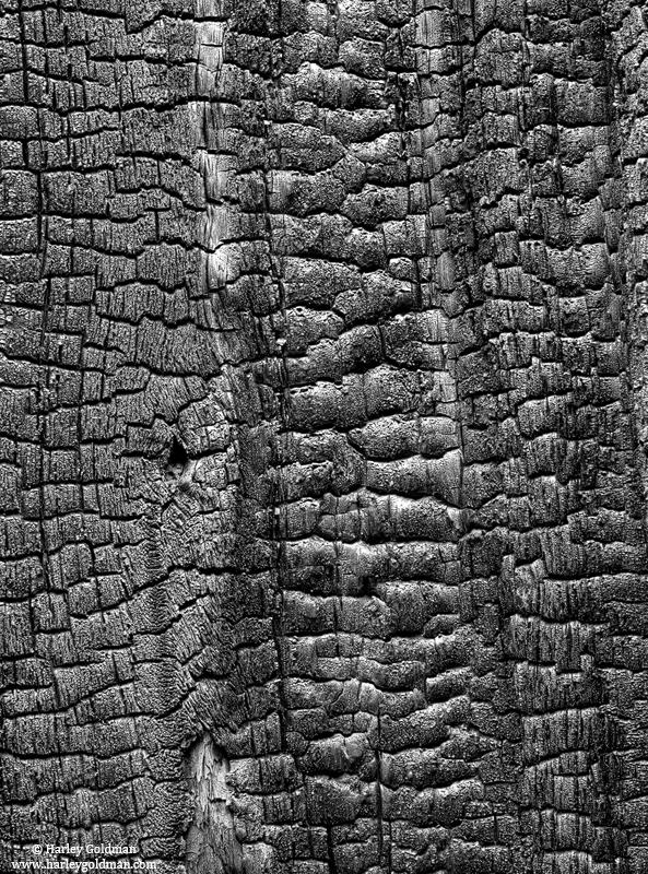 tree, charred, pattern, yosemite, national, park, photo
