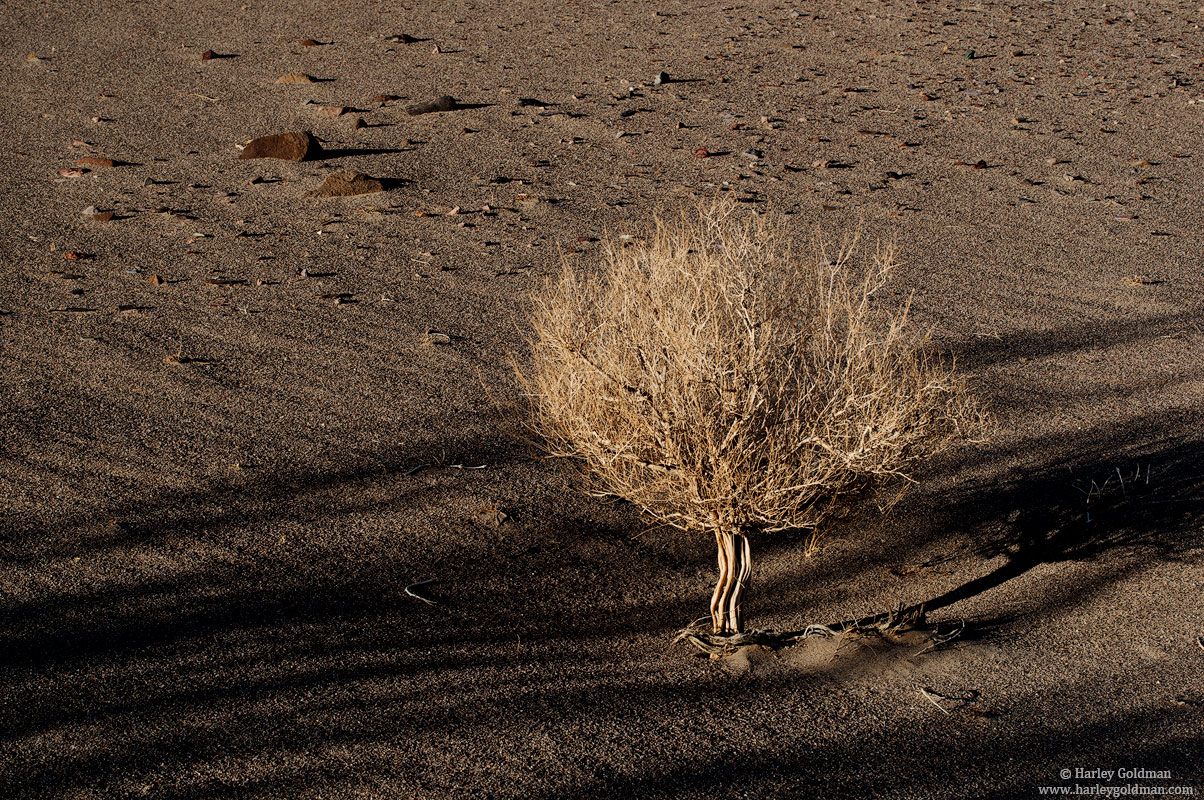 death , valley, national, park, dune, photo