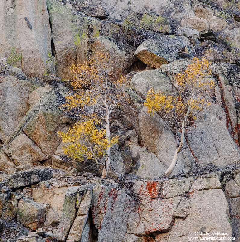 cliff, dweller, eastern, sierra, mountain, ca, photo