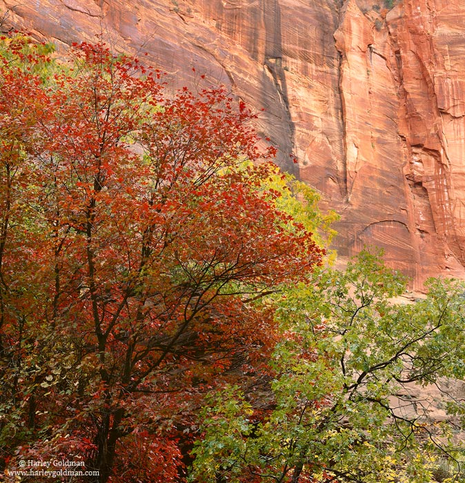 zion, national, park, canyon, photo