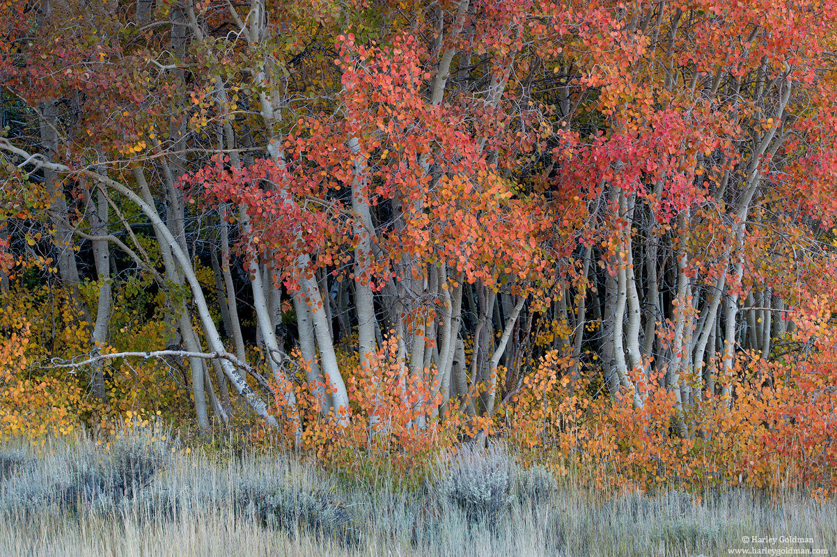 autumn, eastern sierra, nevada, california, photo