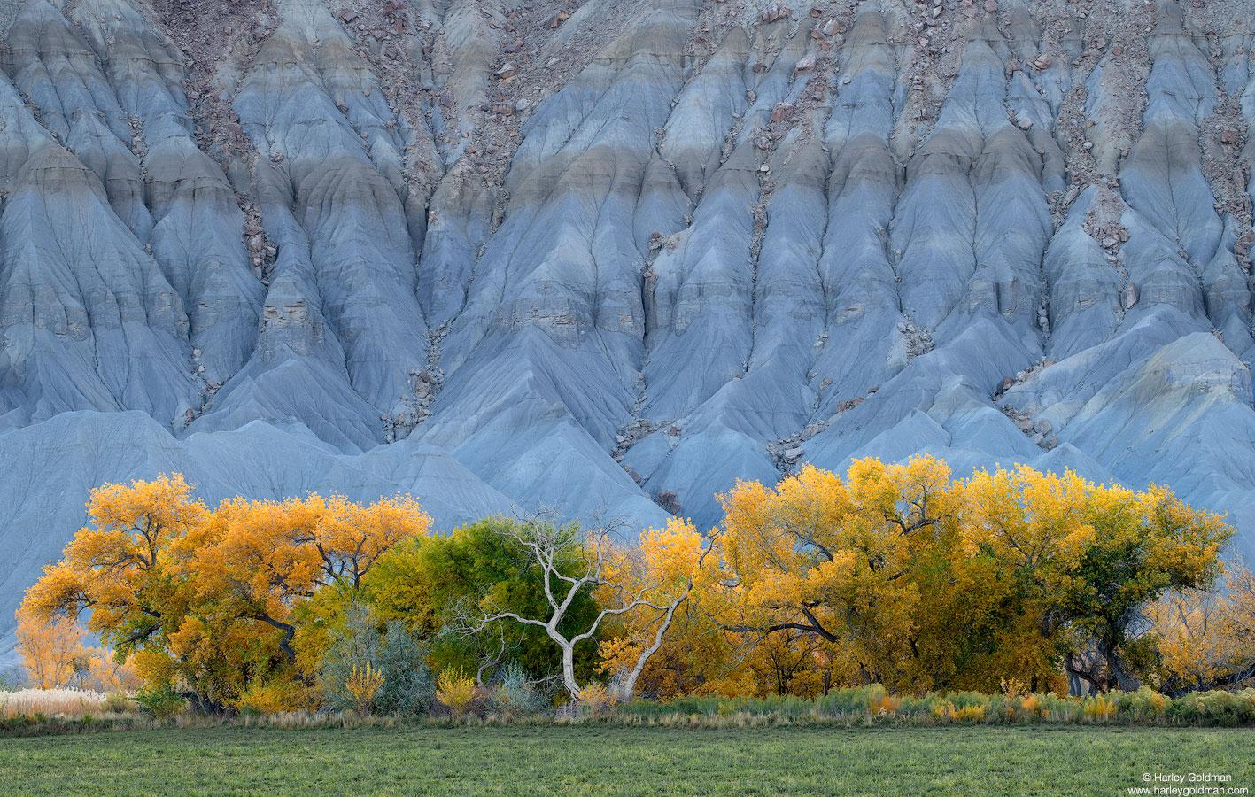 cottonwood, hill, utah, blue, grass, autumn, fall, snag, bentonite