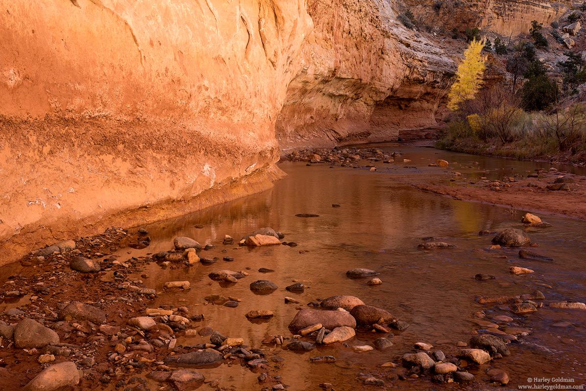 Utah, creek, sandstone, fall, autumn, cottonwood, canyon, wall