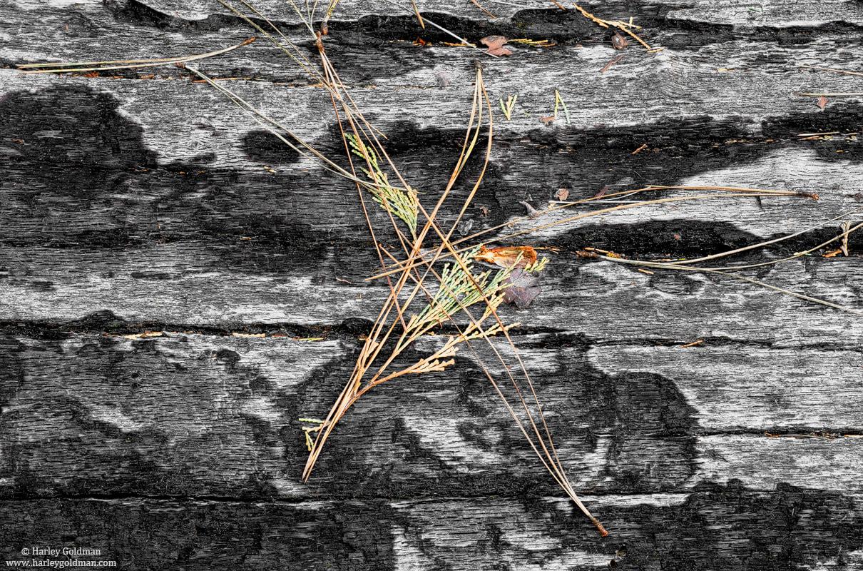 yosemite, national, park, valley, needles, bark, photo