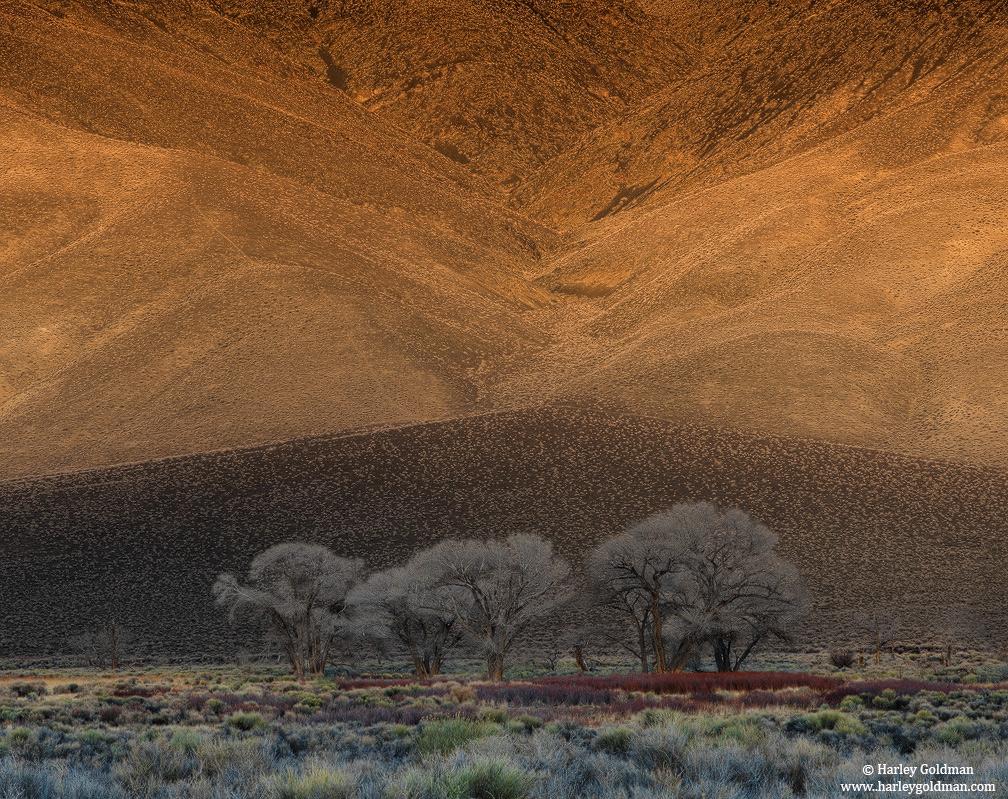 owens valley, sierra, nevada, cottonwood, tree, photo