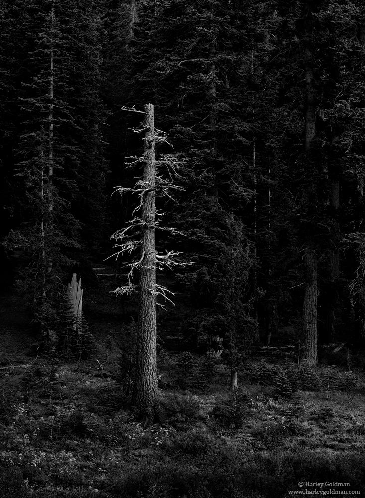 last light, sonora, pass, sierra, mountain, photo