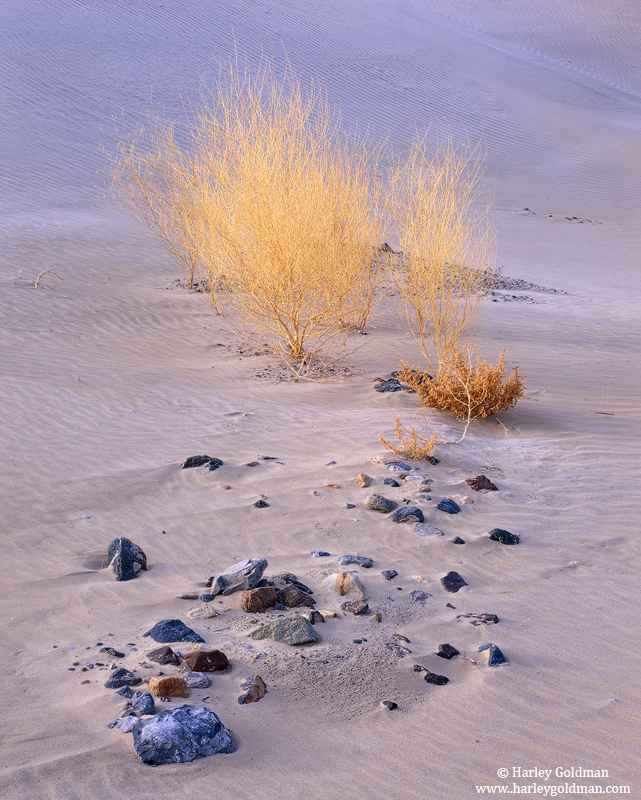 Death Valley, National Park, California, desert, garden, photo
