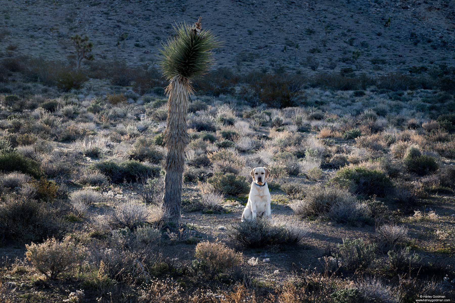 Tioga in the desert