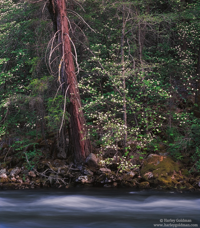 yosemite, national, park, dogwood, merced, river, photo