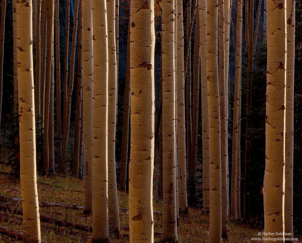 San Juan Mountain, Colorado, photo