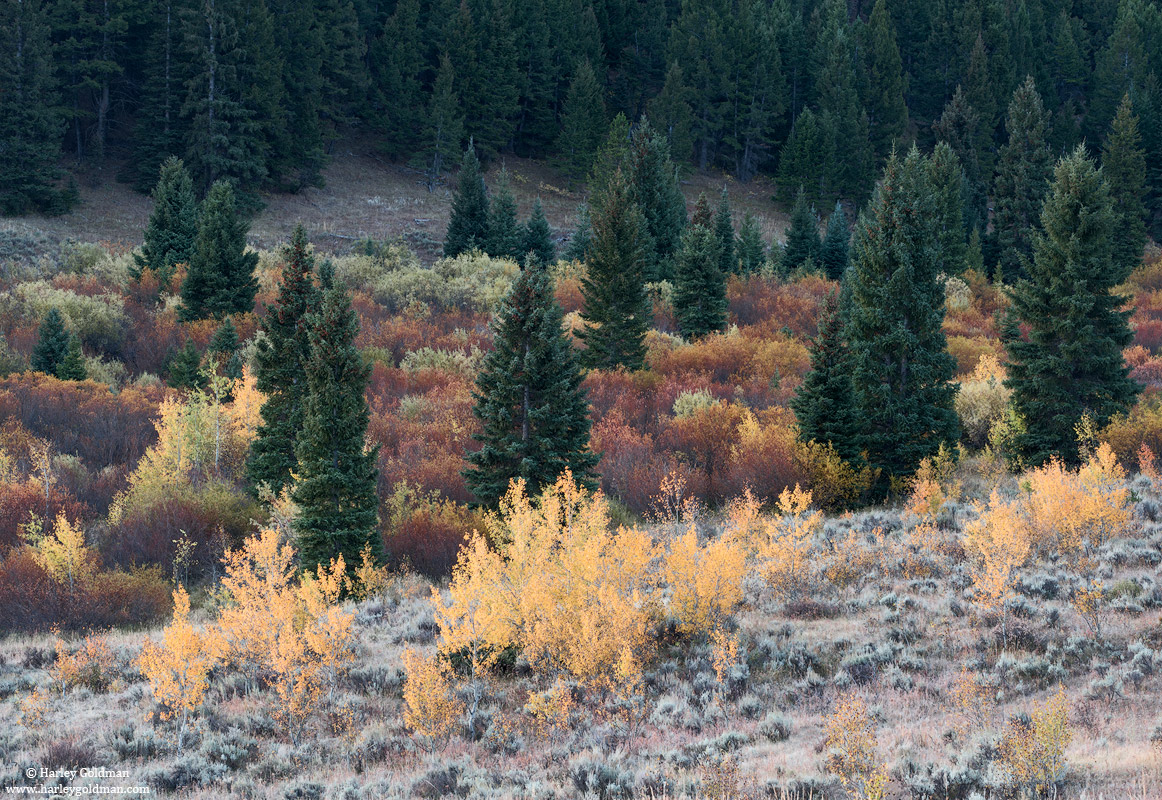 evergreen, autumn, Montana, photo