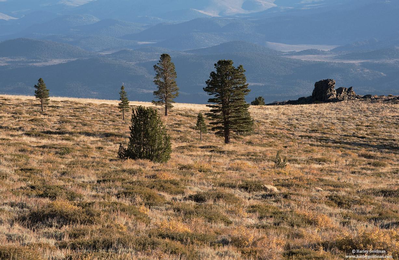 sierra, nevada, eastern, , photo