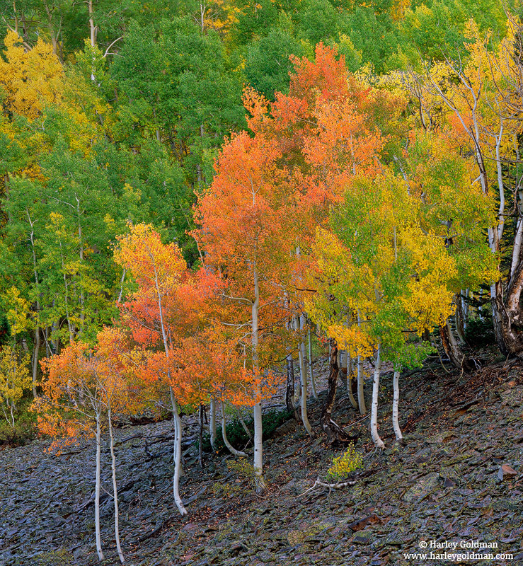 fall, aspen, ohio pass, colorado, photo