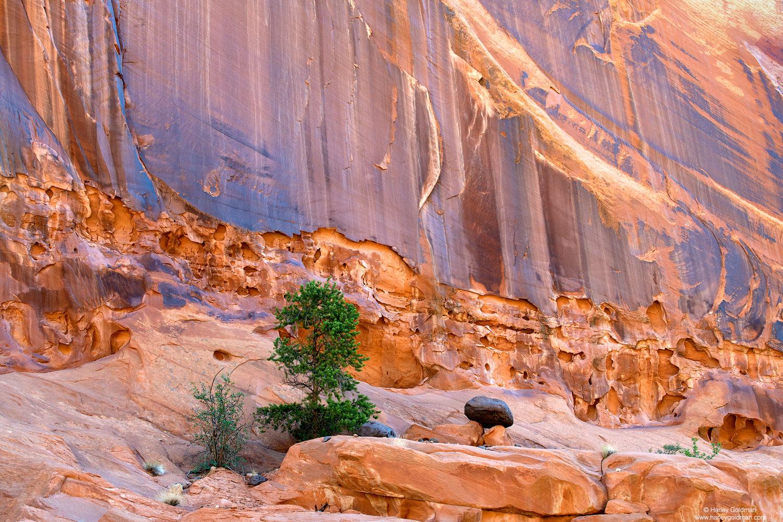 Utah, sandstone, rock, wall, boulder, tree, pine, pinyon