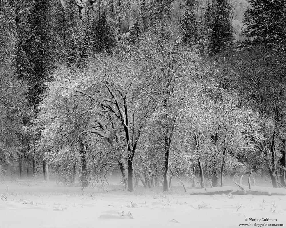 Yosemite, Valley,National Park, Fog, El Capitan, Meadow