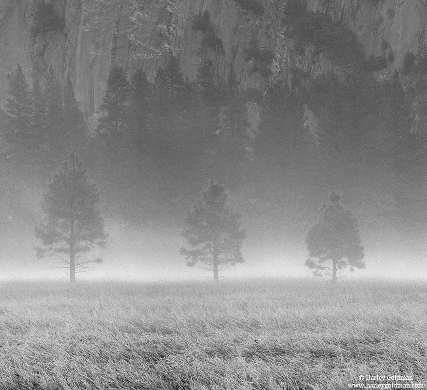 fog, tree, yosemite, valley, national, park, photo