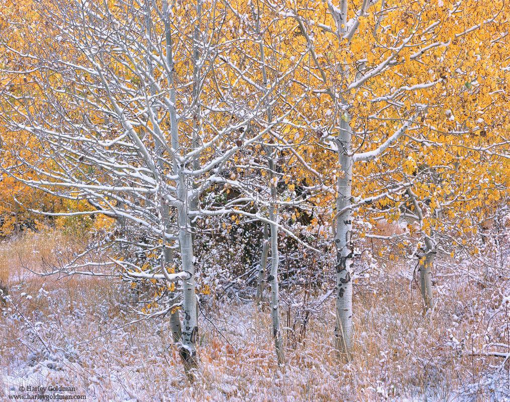 eastern, sierra, nevada, photo