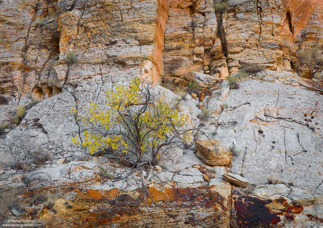 Utah, autumn, fall, sandstone, rock, canyon