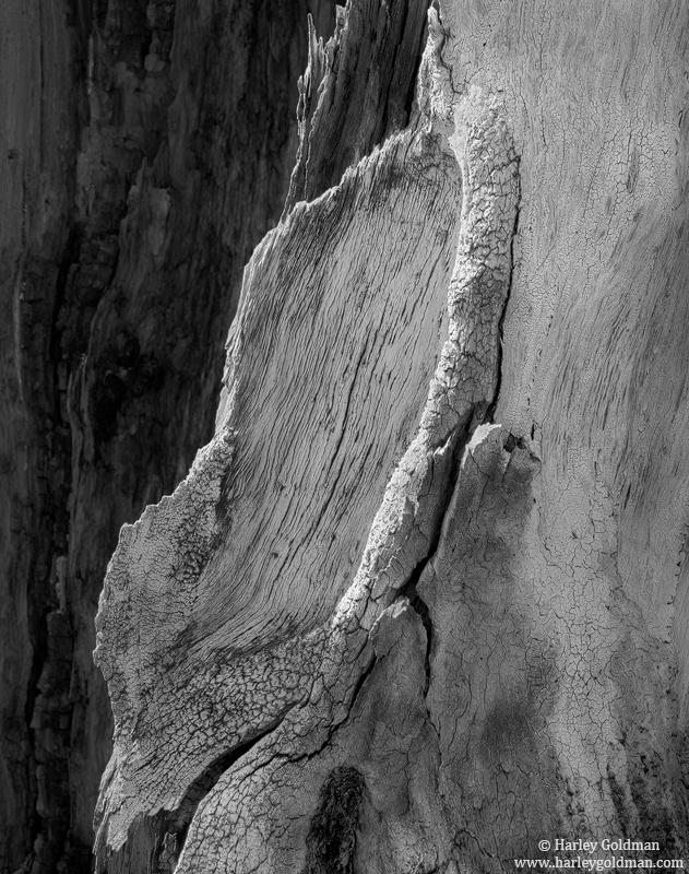 grain, tree, wood, photo
