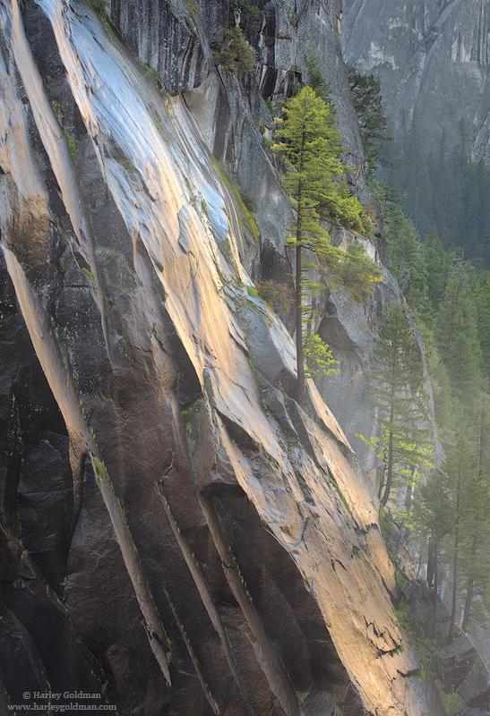 yosemite, national, park, rock, granite, wall, tree, pine, canyon, merced, river