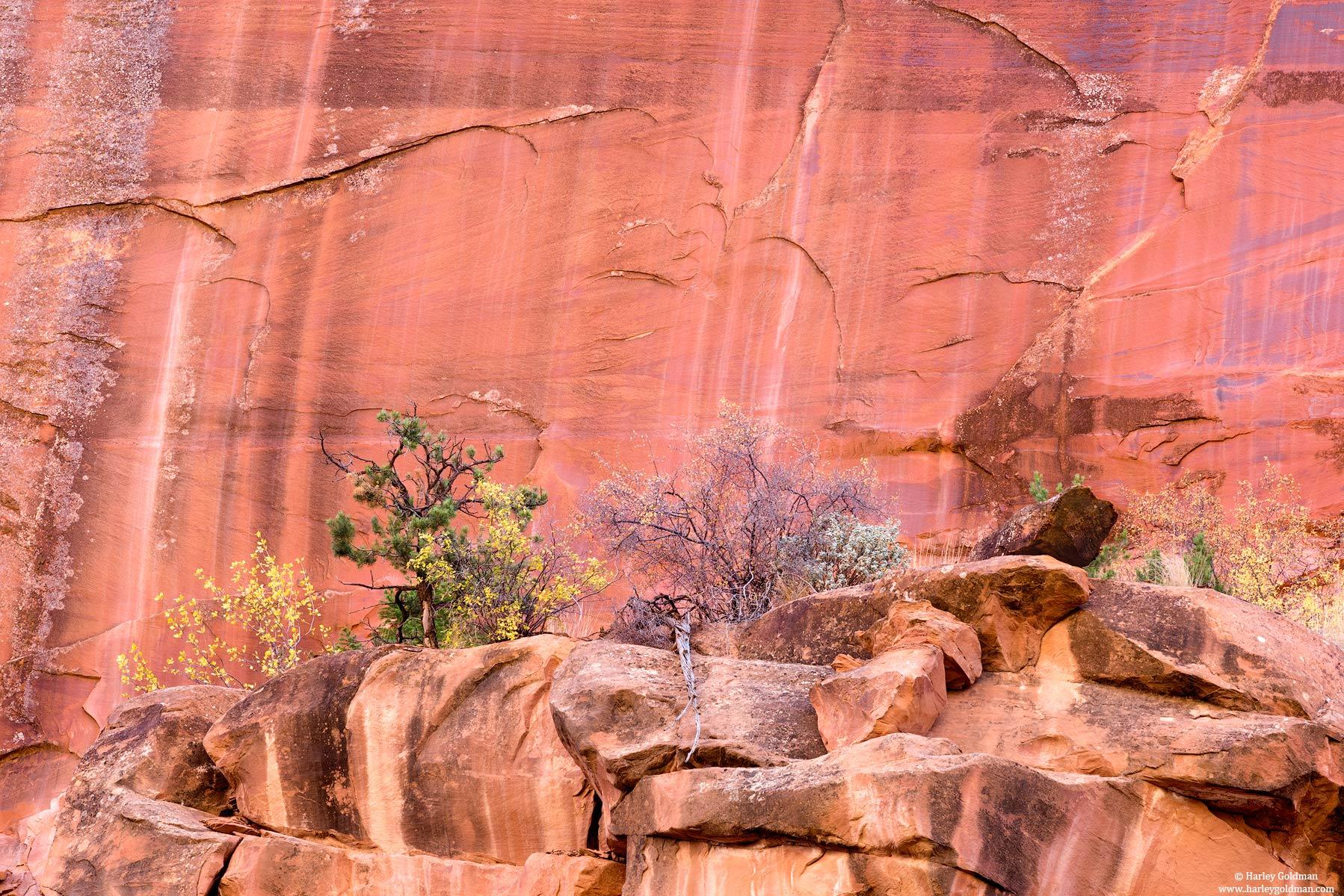 Utah, sandstone, stone, rock, wall, canyon, fall, autumn, color