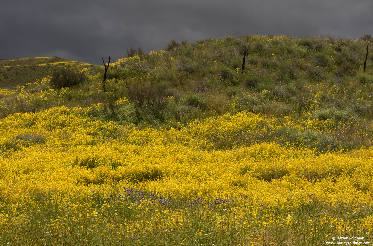 flowers, carrizo, plain, monument, yellow, purple, photo