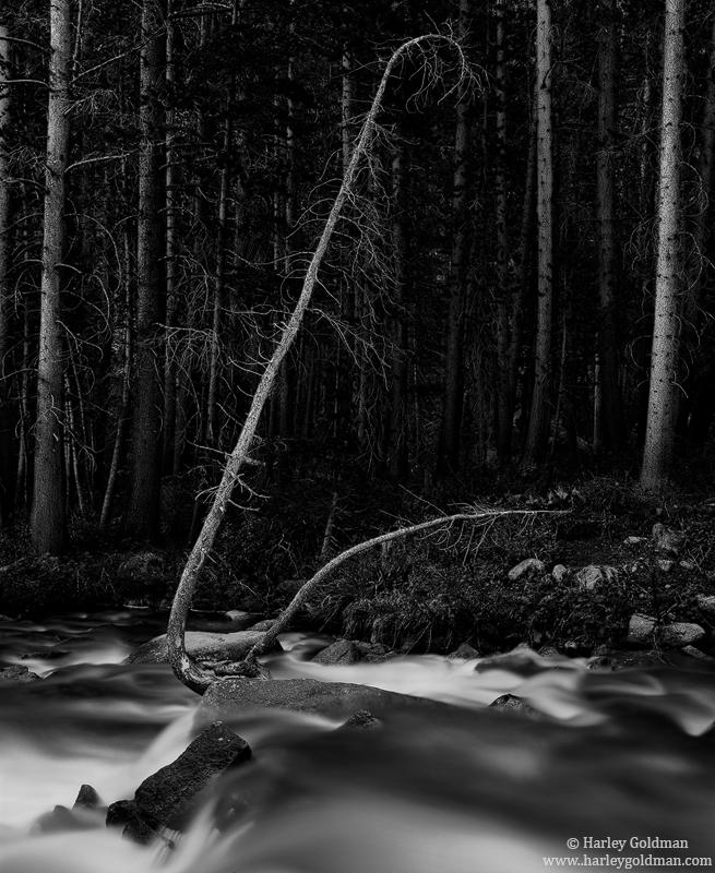 rock, creek, sierra, nevada, photo