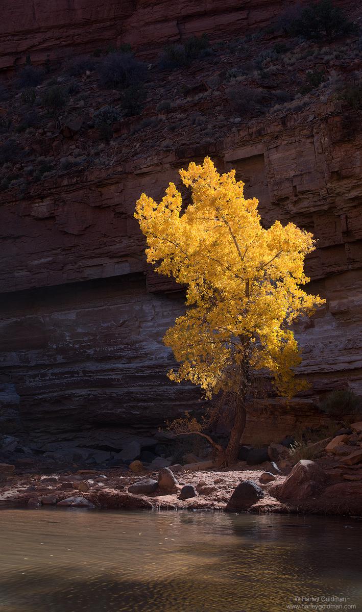 Utah, cottonwood, creek, river, canyon, fall, autumn