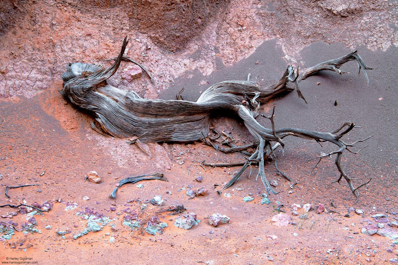 Utah, juniper, tree, rock, canyon