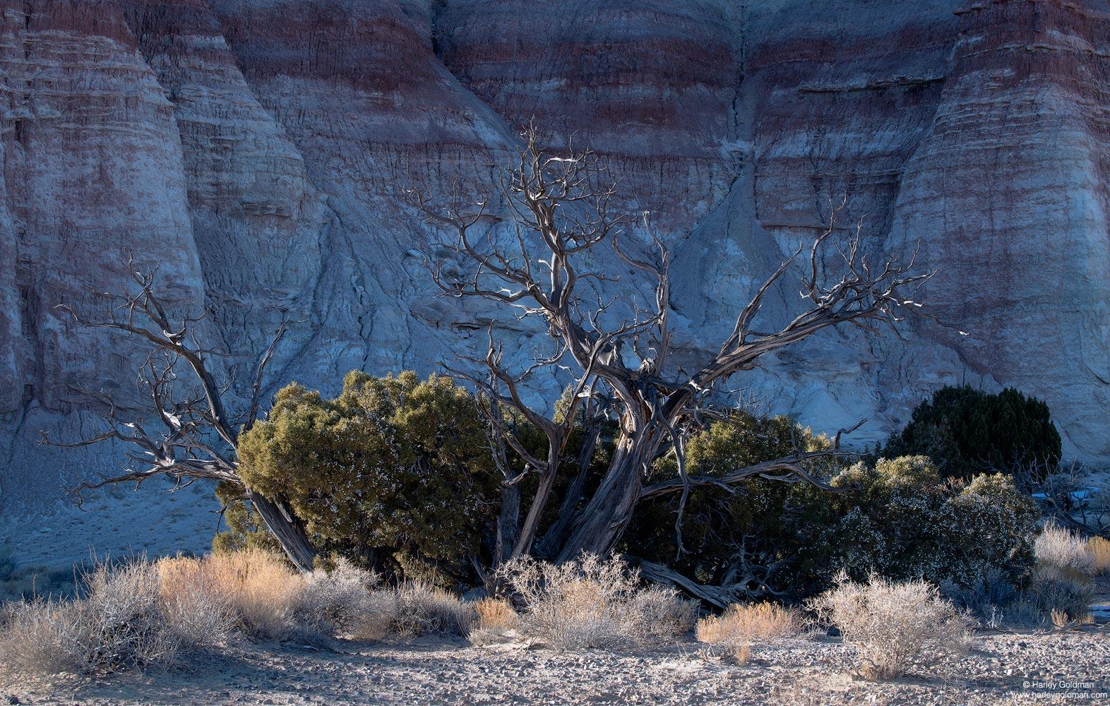 Utah, juniper, bentonite, wall, desert, brush