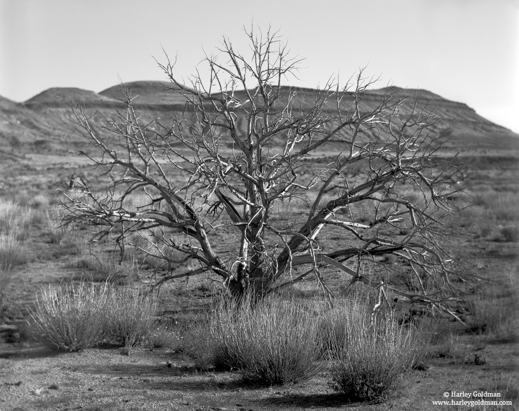 juniper, mojave, preserve, tree, fire, photo