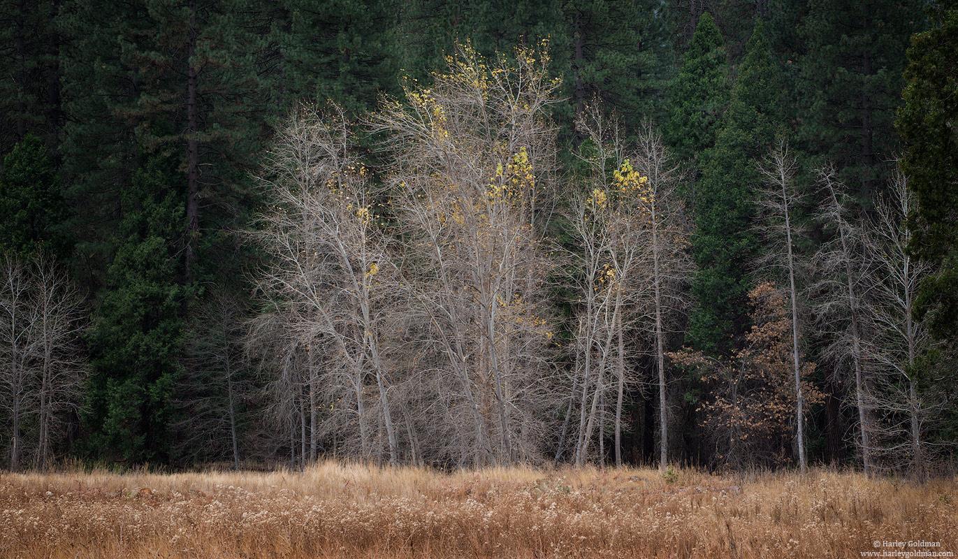 autumn, yosemite, national, park, fall, oak, grass, meadow