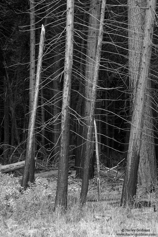 yosemite, national, park, , photo