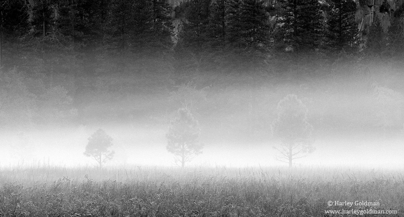leidig, meadow, fog, yosemite, valley, park, national, morning, photo