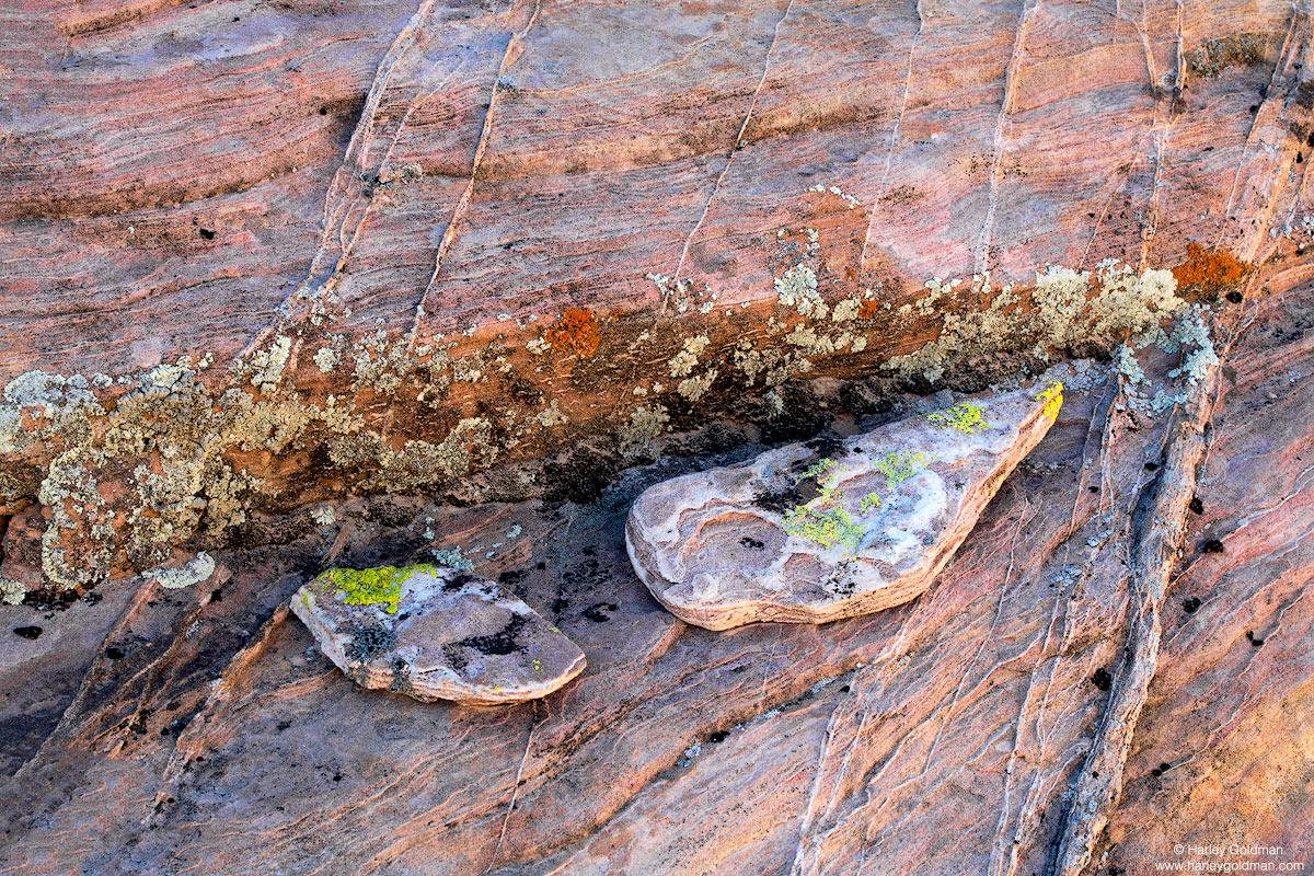 nevada, lichen, desert, rock, sandstone
