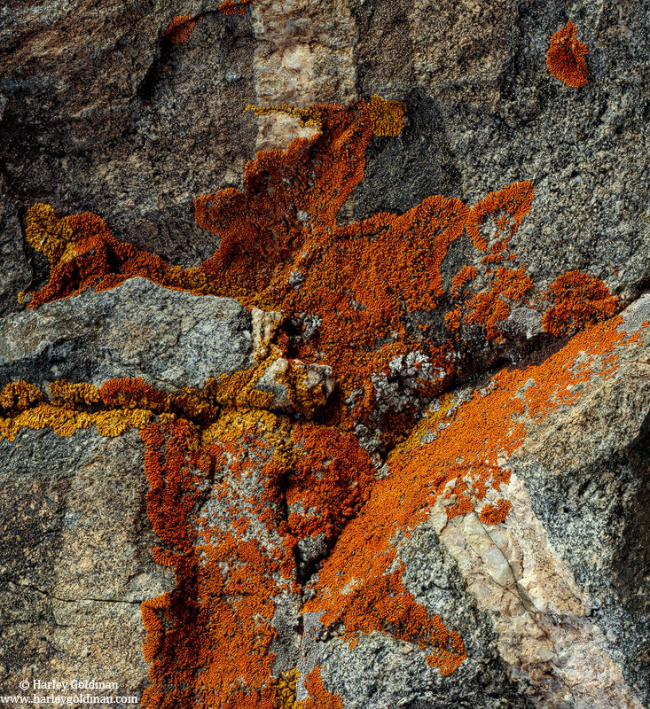 lichen, rorschach, granite, sierra, nevada, mountain, photo