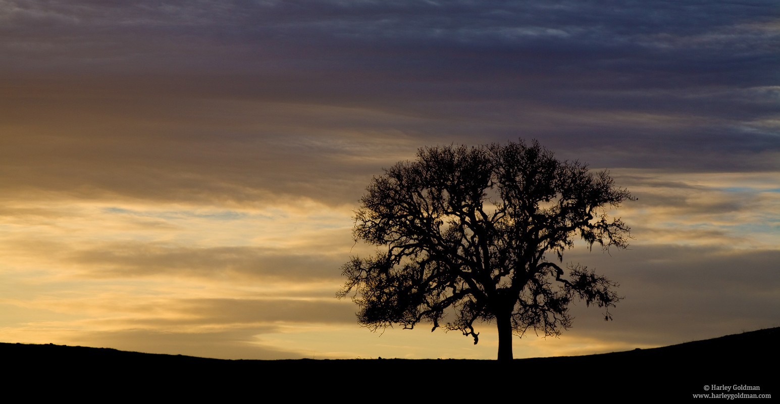 Santa Ynez, Valley, Santa Barbara, County, California, oak, photo