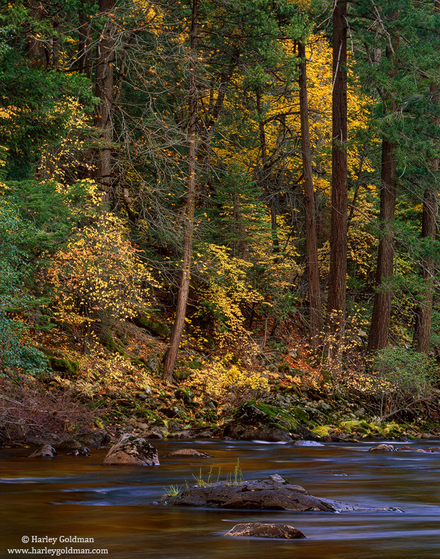 Fall color on the Merced River in Yosemite National Park.