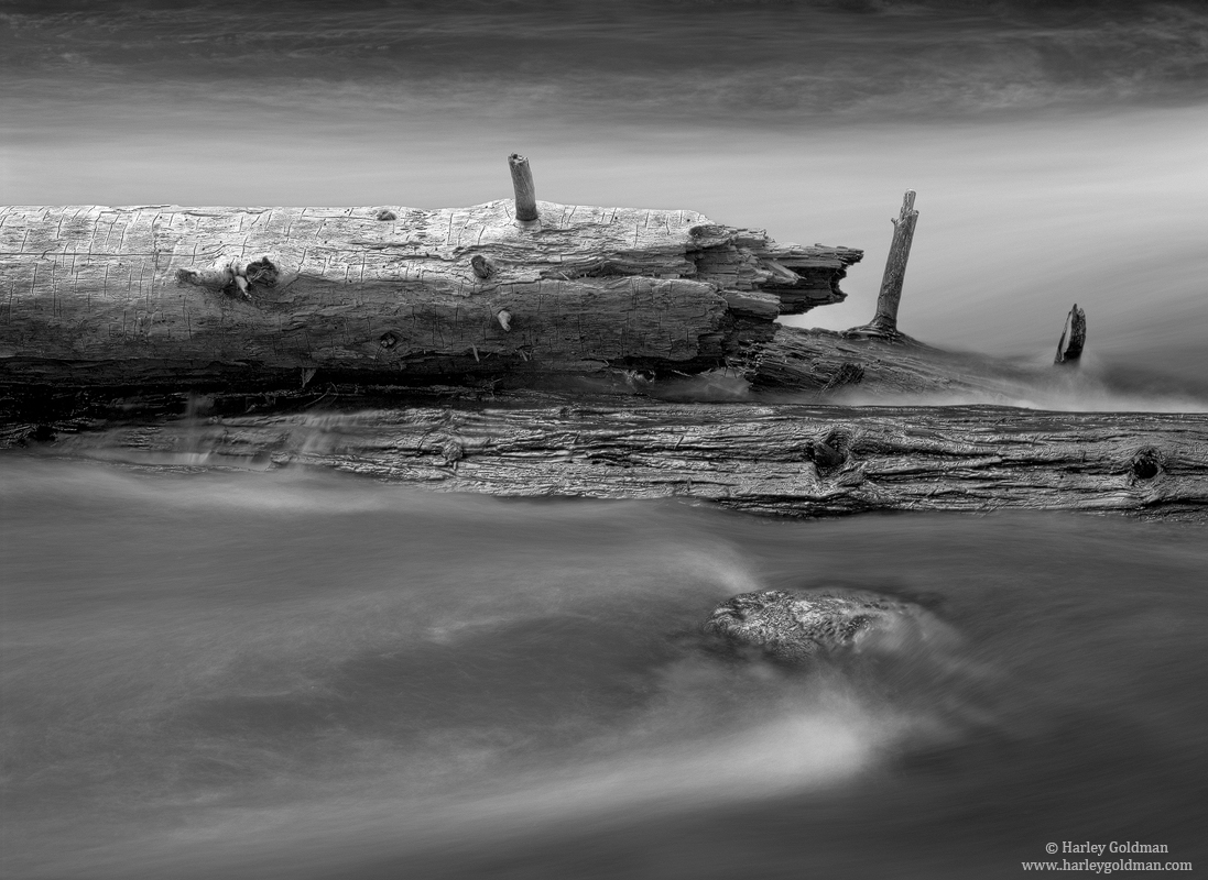 yosemite, national, park, merced, river, log, photo