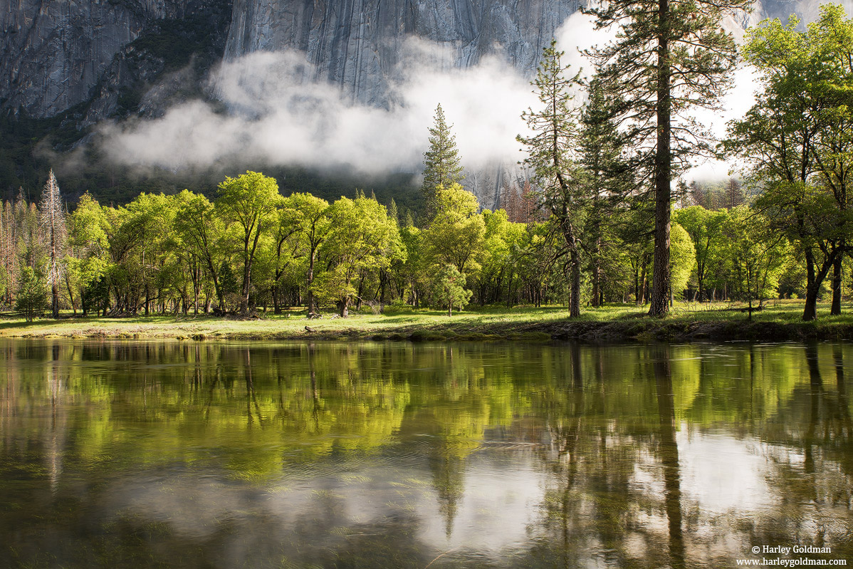merced, river, yosemite, park, reflection, oak, , photo