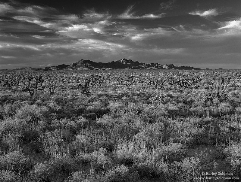 new, york, mountains, mojave, preserve, cloud, photo