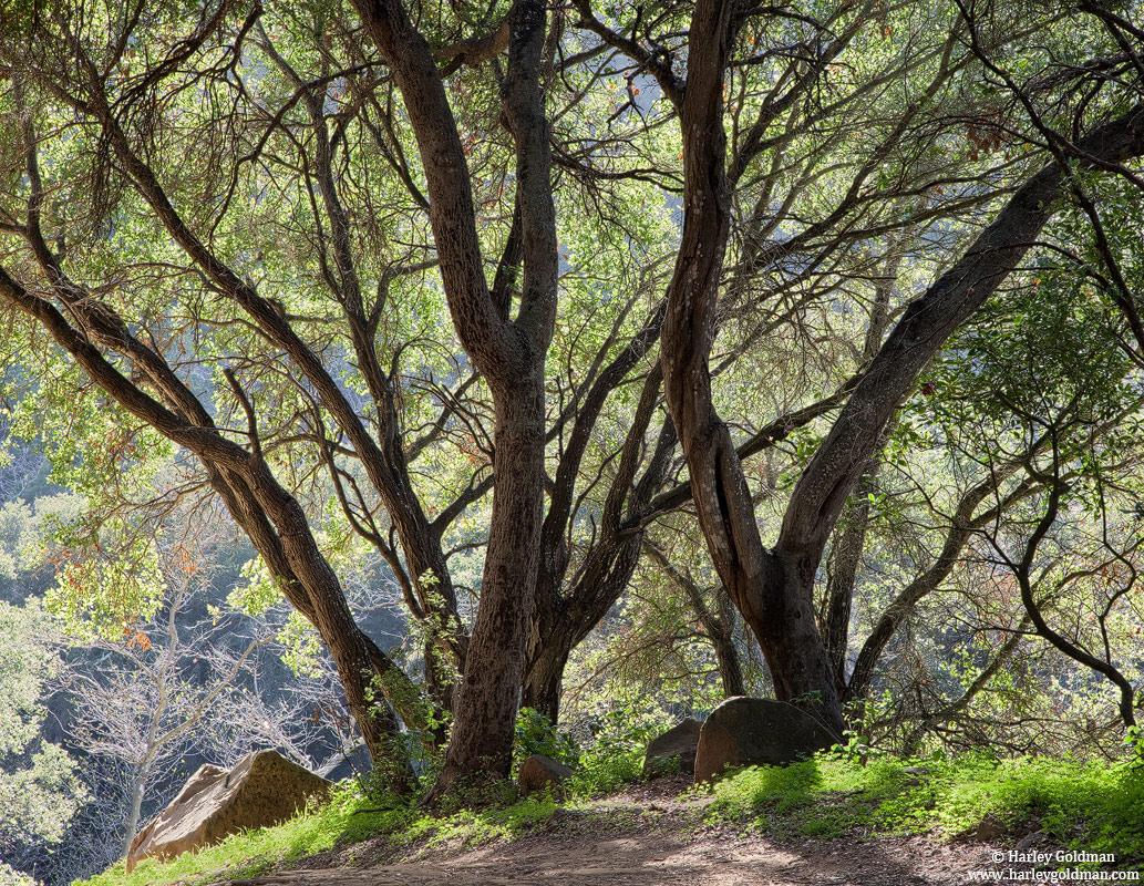 oak, trail, santa, barbara, photo
